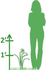 1-2'H Perennials