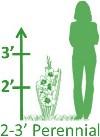 2-3'H Perennials
