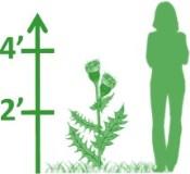 3-4'H Perennials