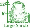 Large Shrubs