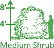 Medium Shrubs