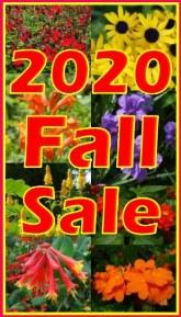 2020 Fall Sale