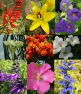 Plants by Flower Color