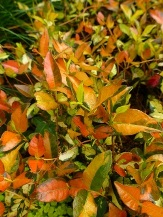 Orange Foliage/Stems or Marked with Orange