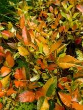 Orange Foliage/Stems or Marked with Orange