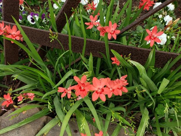 Woodland Painted Petals, Flowering Grass