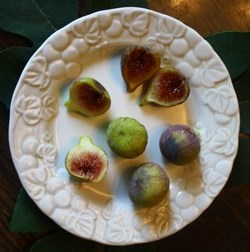Chicago Hardy Fig, Hardy Chicago