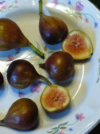 Celeste Fig, Honey Fig, Blue Celeste Fig, Malta Fig, Sugar Fig, Violette Fig
