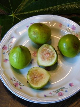 Conadria Fig