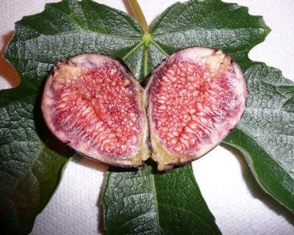 Violette de Bordeaux Fig, Negronne Fig
