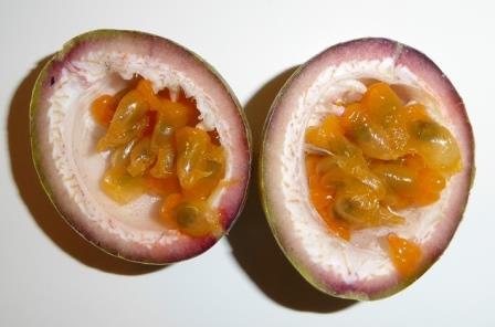 Possum Purple Fruiting Passion Vine, Passionflower, Passionvine