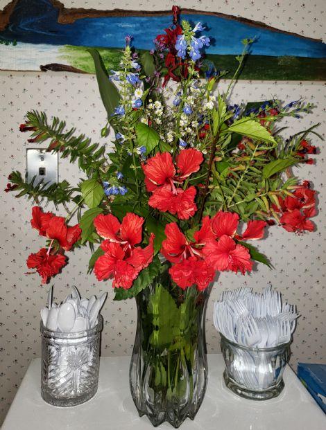 Red El Capitolio Hibiscus, El Capitolio Bloody Mary Hibiscus, Red Poodle Hibiscus