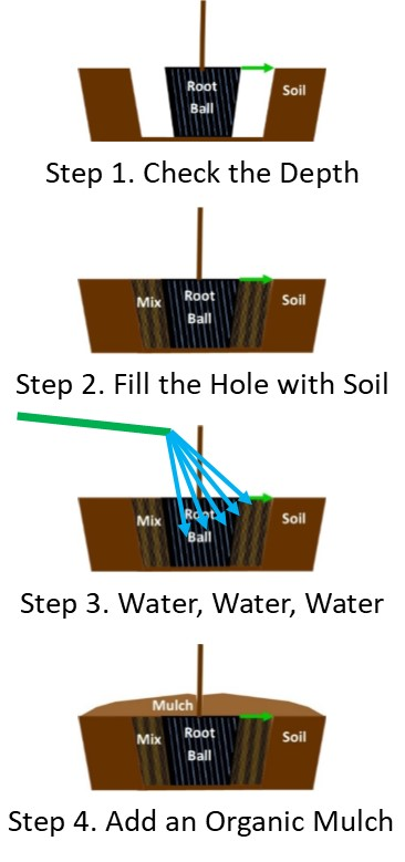 Planting Diagram for Average to Well-Drained Soils