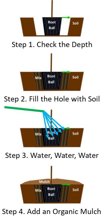 Gardenia Planting Diagram