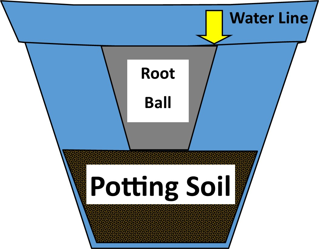 Potting or Uppotting a Container Grown Plant or Mixed Container Gardens