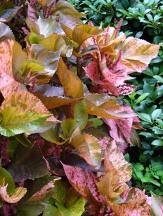 Copper Plants