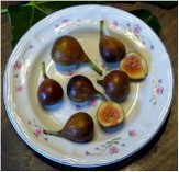 Celeste Fig, Honey Fig, Blue Celeste Fig, Malta Fig, Sugar Fig, Violette Fig, Ficus carica 'Celeste'