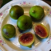 Strawberry Fig, Verdone Fig, Green Ischia Fig