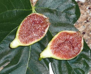 Desert King Fig, King Fig, Charlie Fig, White King Fig