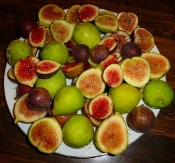 All Fig Varieties